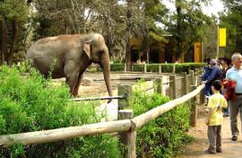 hoteles cerca del zoológico de córdoba